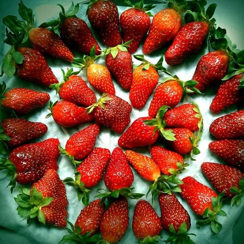 2013_04_26_erdbeeren